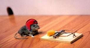 mouse-trap.jpg